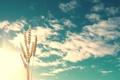 Картинка небо, природа, колосья, clouds, wheat, sunlight