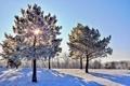 Картинка зима, небо, лучи, снег, деревья