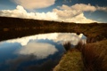 Картинка облака, осень, отражение, трава, озеро