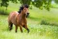 Картинка зелень, лошадь, бег