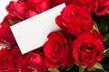 Картинка розы, Цветы, открытка