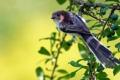 Картинка листья, птица, фон, ветка, плоды