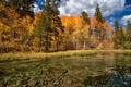 Картинка осень, лес, деревья, озеро, дно
