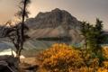 Картинка гора, Канада, Альберта, Banff National Park, Alberta, Canada, кусты