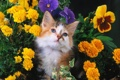 Картинка кошка, кот, цветы, cat
