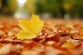 Картинка осень, листья, парк, настроение, листва, листопад, листки
