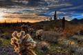 Картинка пейзаж, закат, природа, пустыня, кактусы