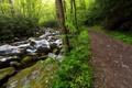 Картинка дорога, лес, лето, камни, фото, речка