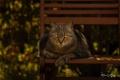 Картинка кошка, кот, скамейка, мордочка