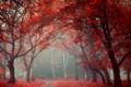 Картинка осень, деревья, город, парк