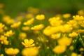 Картинка поле, цветы, природа, весна