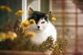 Картинка кошка, цветы, дом