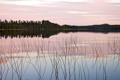 Картинка закат, лес, деревья, озеро, природа
