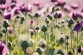 Картинка поле, солнце, лучи, цветы, природа, фото, обои
