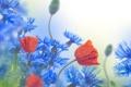 Картинка цветы, васильки, маки