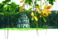 Картинка green, leaf, vietnam