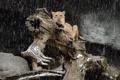 Картинка морда, хищник, лев, бревно, львица, дикая кошка, снегопад