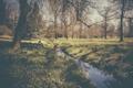 Картинка ветки, ручей, тень, зеркало, человек, деревья, трава