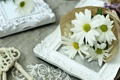 Картинка букет, ромашка, лепестки, натюрморт, цветы