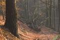 Картинка осень, лес, деревья, поваленные