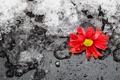 Картинка зима, цветок, лёд