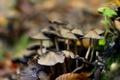Картинка мох, грибы, боке