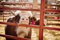 Картинка фон, корова, Michelle