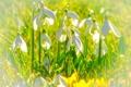 Картинка поле, трава, лепестки, подснежник