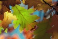 Картинка осень, макро, листва, цвтастая