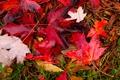 Картинка осень, трава, листья, вода, капли, макро