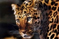 Картинка хищник, арт, леопард, Carl Brenders
