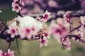 Картинка макро, цветы, дерево, яйцо, ветка, весна, гнездо