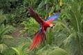 Картинка полет, яркий, птица, крылья, попугай