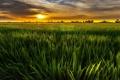 Картинка поле, пейзаж, закат, природа