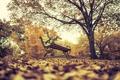 Картинка осень, листья, деревья, парк, скамья