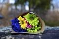 Картинка цветы, синий, желтый, зеленый, фон, розовый, widescreen