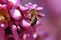 Картинка цветок, пчела, шмель