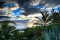 Картинка море, вода, солнце, лучи, тучи, пальмы, алоэ