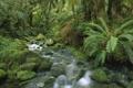 Картинка лес, река, камни, мох, Новая Зеландия, папоротники