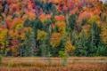Картинка дорога, осень, лес, трава, деревья, пейзаж, склон