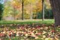 Картинка осень, листья, дерево, яблоки, урожай, плоды