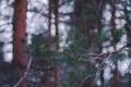 Картинка лес, иголки, ветки