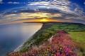 Картинка море, небо, солнце, цветы