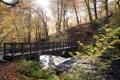 Картинка мост, природа, парк, речка