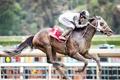 Картинка конь, гонка, спорт, всадник