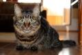 Картинка крупный план, Кошка, cat
