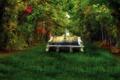 Картинка лес, трава, деревья, скамейка