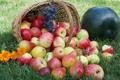 Картинка яблоки, виноград, трава, корзина, груши, фрукты, ягоды