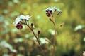 Картинка цветы, природа, стебли, лепестки, flowers