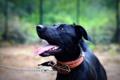 Картинка взгляд, друг, преданность, собака, чёрная